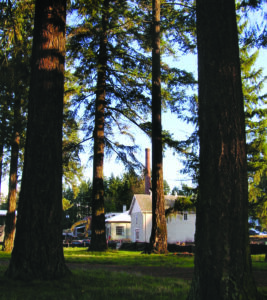 pringle creek community - nature (trees and buildings)